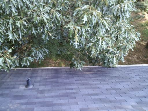 Marietta's Best Gutter Cleaners Before and After Tree Pruning