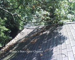Marietta's Best Gutter Cleaners does tree pruning of limbs coming in range of the gutters.